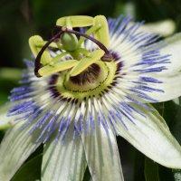 Странный цветок :: Андрей Воробьев