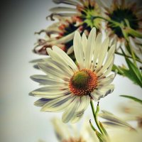 Осенние цветы :: Сергей Крюков