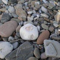 Кольца на берегу моря! :: Soloveika ***