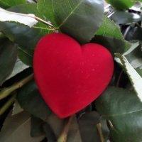 Сердце в лепестках роз :: Soloveika ***