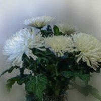 хризантемы на день рождения :: Татьяна Чернова