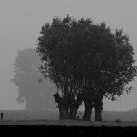 Туман :: Roman Braun