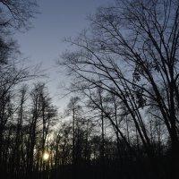 Чистое небо :: Tarasenko SERGI Tarasenko
