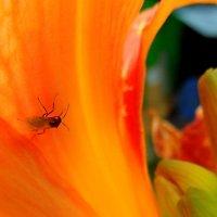 ...Фантом мухи...     или...  цветомания!....:))).... :: Ира Егорова :)))
