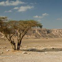 утро в пустыне :: Павел Коротун