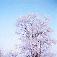 утро зимы :: Надежда Калинина