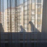 Случайная встреча :: Джамал Абдуллаев