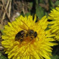 Любите ли вы мед так, как люблю его я? :: Anna Kaminska