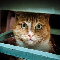Я тебя не боюсь! :: Альберт Семенков