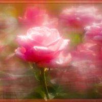 Розы :: Олег Сидорин