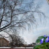 Из окна :: Юрий