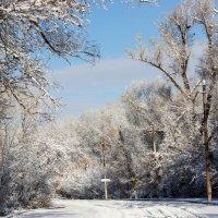 Первый снег :: Эля Османова