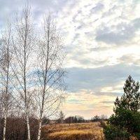 В ожидании зимы :: Мария Богуславская