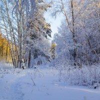 Зимний лес! :: Алексей. Бордовский