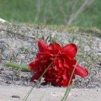 цветок :: Валерия Кашуба