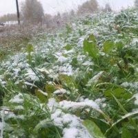первый снег :: Юлия Кудрявцева