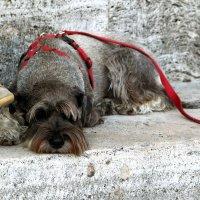 Жизнь собачья :: Любовь Белянкина