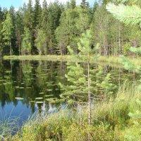 Карельские озера :: николай -