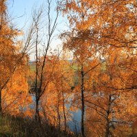Золотая осень :: Никита Филатов