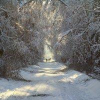 Зимняя дорога :: Александр Мо