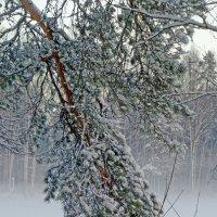 Туманное зимнее утро :: Юрий Цыплятников