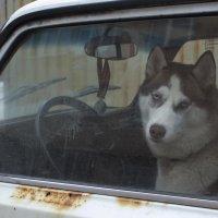 Заместитель водителя :: Роман Ксендзов