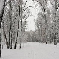 Зимняя дорога :: Сергей Беляев