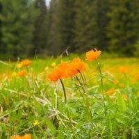 Весна на таёжной поляне :: юрий Амосов