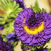 Сердечный цветок. :: Лея Дар
