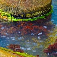 Бухта медуз. :: Edward J.Berelet