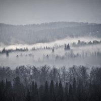 Утренний туман :: Дмитрий Коваленко
