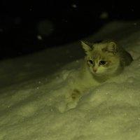 Снежный кот :: Дмитрий Мосин