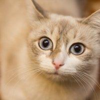 У Котауси большие глазауси! :: Дмитрий Мосин