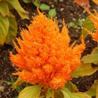 Что-то похожее на цветок :: Katherine Mozgo