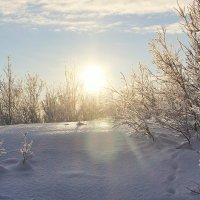 Мороз и солнце :: Ирина Блажи