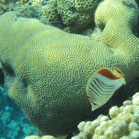 Коралловый риф :: Татьяна Чичагина