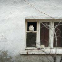 Один дома :: надежда корсукова
