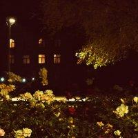 Ночь, улица, фонарь... :: MEM LLENS