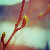 Весна :: Marina Laguna