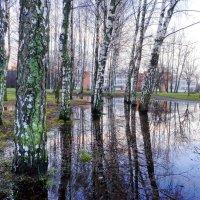 Рождество в Клайпеде :: Леонид Соболев