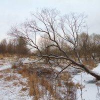 Январь. Первый снег. :: Anton Lavrentiev
