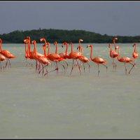 Розовый фламинго :: Евгений Золотов