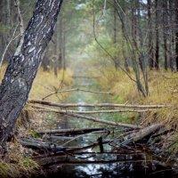 осень в лесу :: Алексей Мусатов