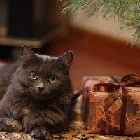 Лучший мой подарочек - это ТЫ!! :: Ирина Абрамова