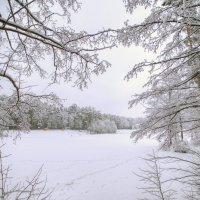 Пруд зимой :: Владимир