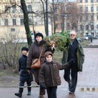 Наша елка :: Илья Бескаравайный