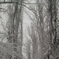 Зима :: Дарья Шаповалова
