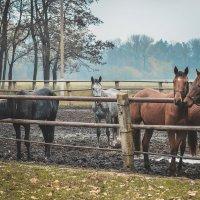 кони :: Андрей Динец