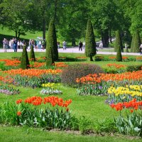 Тюльпаны Петергофа... :: Jelena Volkova