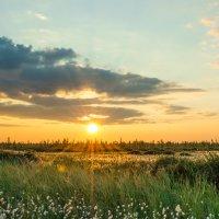 Наблюдая летний закат в тундре. Новый Уренгой,август 2013. :: Kamil Nureev